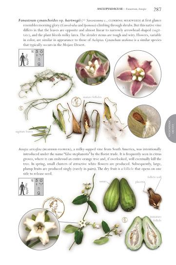 flora book inside
