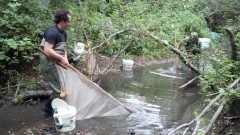 Water Quality: Woelfle-Erskine's Search for Salmon
