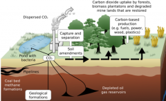 Beyond emissions: The promise of products from captured carbon