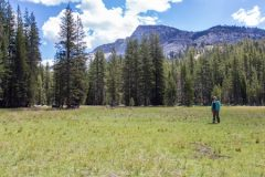 ERG Faculty Lara Kueppers Finds Critical Sierra Meadows Being Overtaken by Forest
